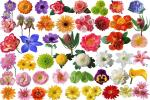 Chia sẻ PSD Hoa cưới, cây cỏ  miễn phí