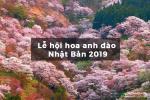 Lễ hội Hanami - Dự báo lịch ngắm hoa anh đào Nhật Bản 2019