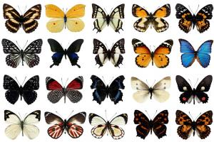 Chia sẻ bộ source con bướm cực chất