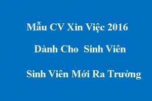 Mẫu CV Sinh Viên - Cho Sinh Viên Mới Ra Trường