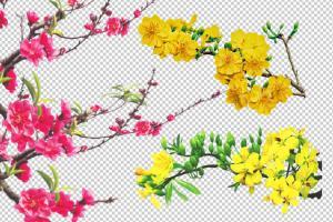 Tải 22 file PSD Hoa đào, hoa mai đã tách nền dùng cho các thiết kế chủ đề Tết