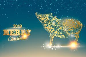 Free Vector Heo Vàng 2019, Vector Con Heo đón giáng sinh, năm mới 2019