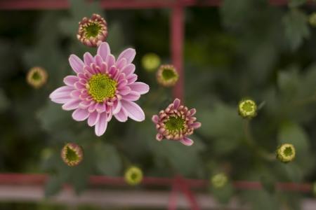 Hình nền hoa cỏ mùa xuân cho điện thoại