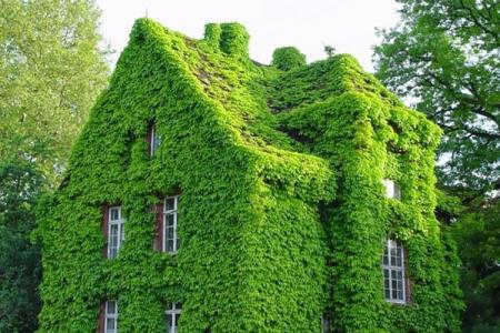 12 cách khiến căn nhà của bạn mát rượi mà không cần điều hòa
